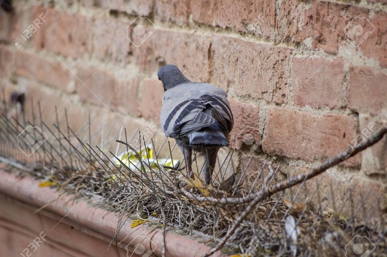 Boj proti holubům BIRD-STOP