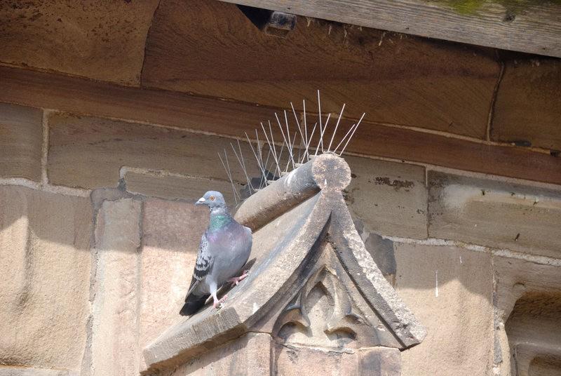 Jak se zbavit holubů BIRD-STOP