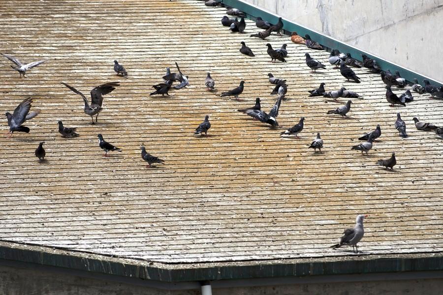 Posrané střechy od holubů BIRD-STOP