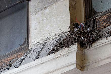 Problém s holuby BIRD-STOP